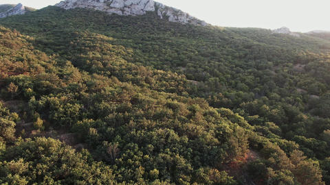 Aerial shot Flight above mountain slopes with pine trees filled with dusk GIF