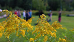 Yellow flowers reveal women exercising Footage