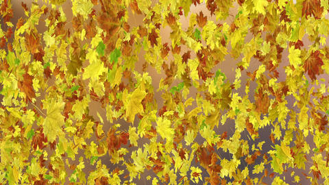 Autumn Leaves Background Animation