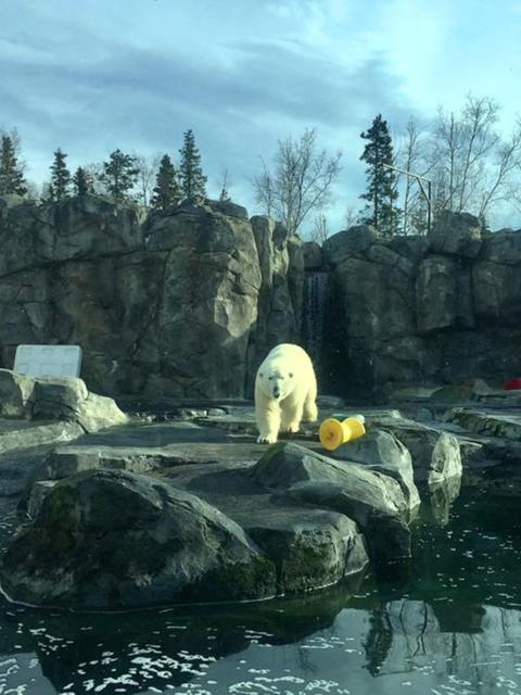 Polar bear フォト