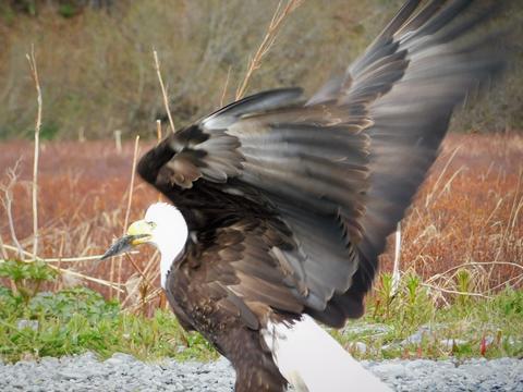 Eagle フォト