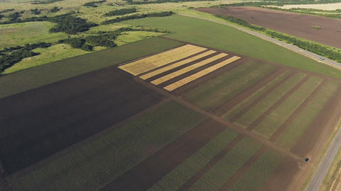 Aerial view of fermer fields. Aerial video Live Action