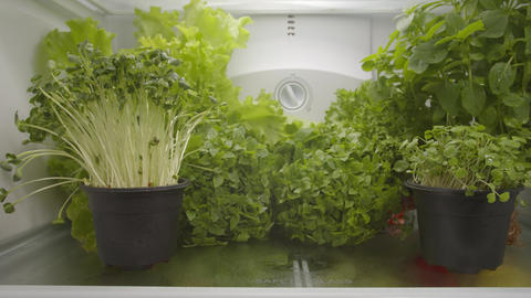 Organic food in refrigerator Footage
