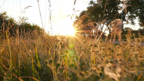 Bright sun rays. Field with grass and trees. Beautiful nature. Camera in motion Archivo