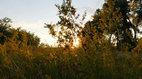 Beautiful sunset by the road. Bright sun rays of the sun. Field with green grass Archivo
