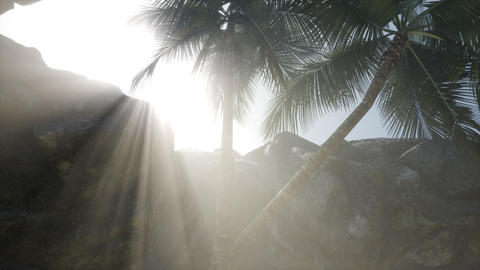 Big Palms in Stone Cave with Rays of Sunlight GIF