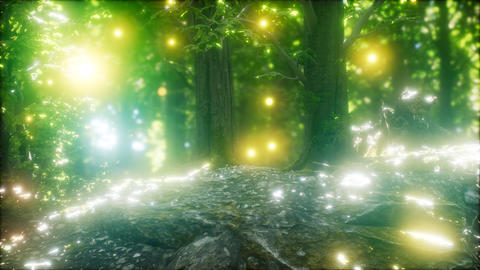 Firefly Flying in the Forest ビデオ