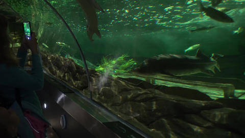 Woman with phone and her daughter watching sea life fishes in big aquarium arch Live Action