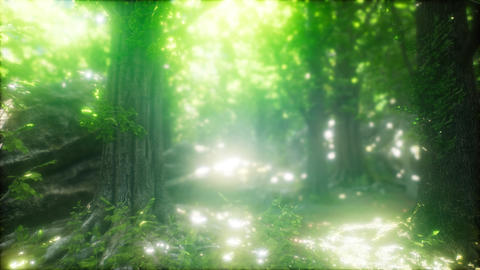 Forest of Beech Trees illuminated by Sunbeams ビデオ