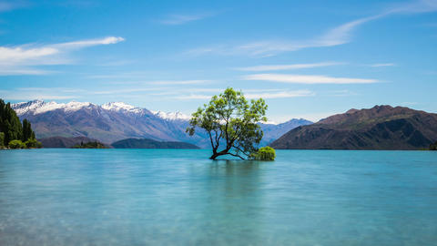 Time Lapse - Cloudscape Moving Over with Lake Wanaka Willow Tree in New Zealand Footage