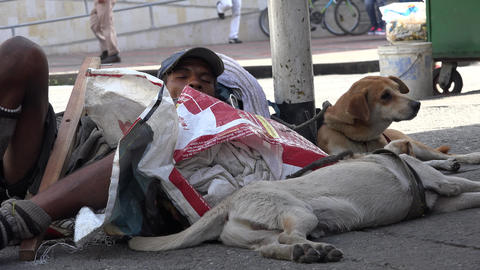 Homeless Man Sleeping with Dogs Footage