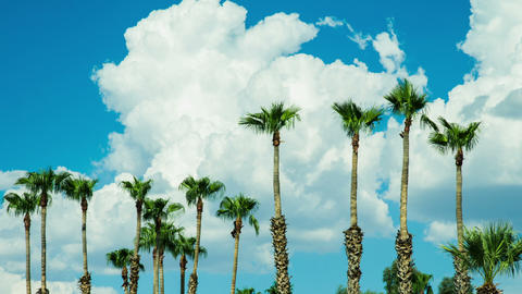 Time Lapse - Beautiful Clouds Moving Over Palm Trees with Blue Sky Footage