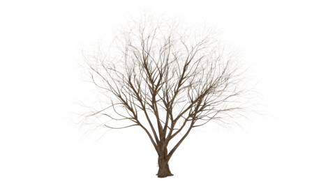 3d object tree sways in the wind, transparent background, animation Live Action