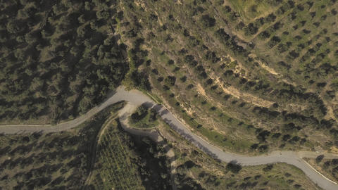 A winding road passes through a valley of olive groves Archivo