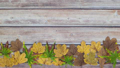 Green, yellow and brown leaves moving on the bottom of wooden table - Stop motion Animation
