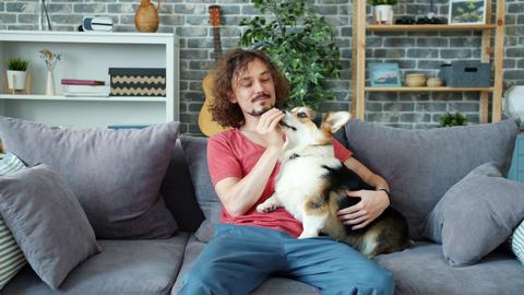 Loving pet owner playing with beautiful corgi dog, animal licking man's hands Archivo