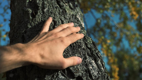 Male hand touches a tree trunk. Young man cares about... Stock Video Footage