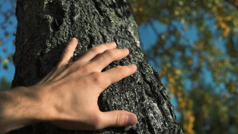 Male hand touches a tree trunk. Young man cares about nature and the environment Live Action