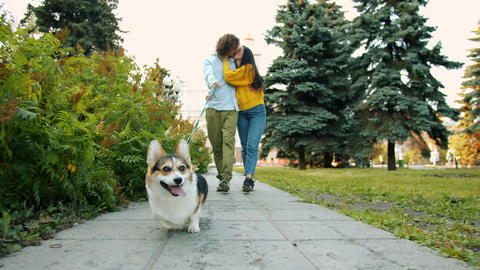 Dolly shot of corgi dog walking in city park with kissing couple man and woman Archivo