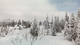 Mountains overgrown with evergreen and deciduous forests. Snow capped mountains Footage