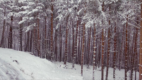Aerial view of winter forest. Snowy tree branch, winter landscape, forest, trees Live Action