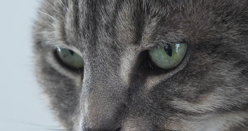 Brown Tabby Domestic Cat, Close-up of Eyes, Real Time 4K Footage