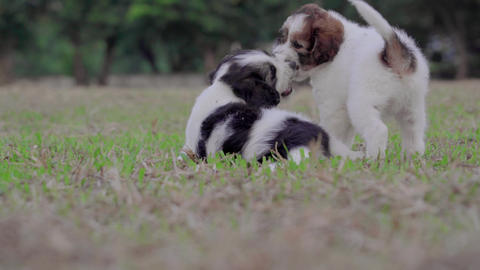 Puppies sitting and enjoy on grass field Live Action