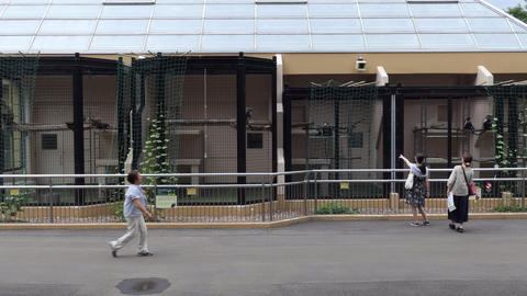 Zoo Cages With Monkeys Primates In Sapporo Hokkaido Japan Asia Live Action
