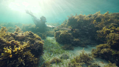 Underwater scene: A spearfisherman swimming near coral and seaweeds on sunny day Live Action