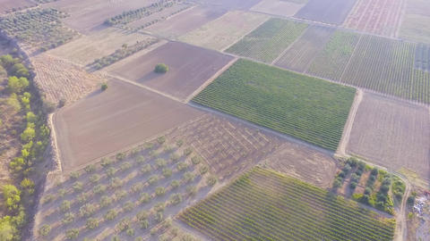 Aerial drone footage of beautiful planted fields and organic agriculture Live Action