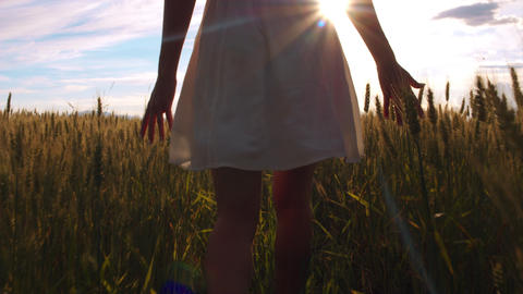 Below waist shot - Behind a girl walking through the field and touching wheat Footage