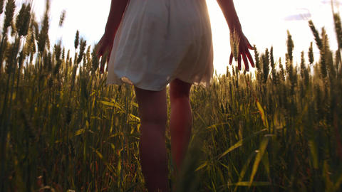 Behind a girl in white dress walking through the field and touching wheat heads Footage