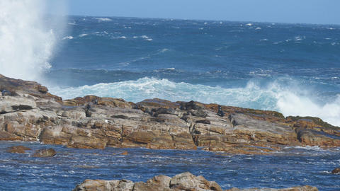 Huddle of sea lions at Cape of Good Hope Live Action