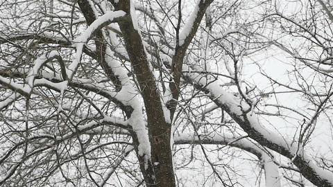 Shallow snow falling on a dark wood background. Winter season. Slow motion Live Action