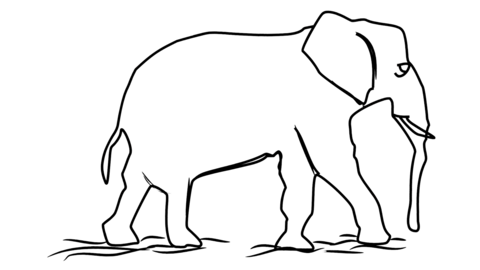 Elephant icon Line Drawing Animation Transparent Background Vector Motion Graphics Loop CG動画