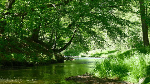 Beautiful river in green sunny forest. Europe, Germany Footage