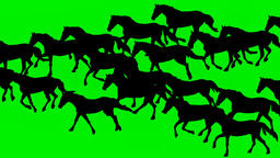 ANIMATED GALLOPING HORSES Animated galloping horses.Hand drawn animation Animation