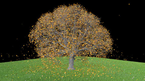 3d object tree with falling leaves, transparent background, animation Live Action