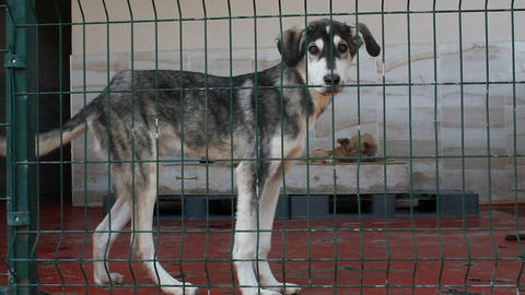 Sick,crippled and abandoned derelict dogs in a pet shelter. Captive animals Live Action