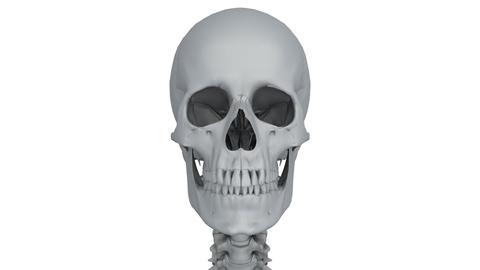 skeleton model Stock Video Footage
