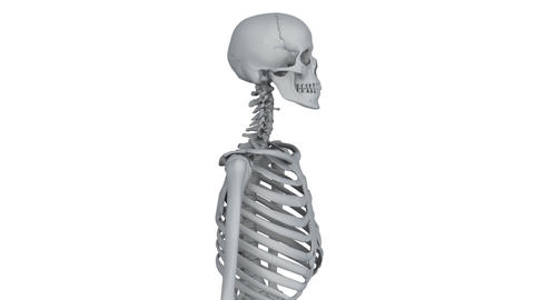 Skeleton Model stock footage