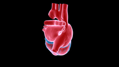 Heart Xray stock footage