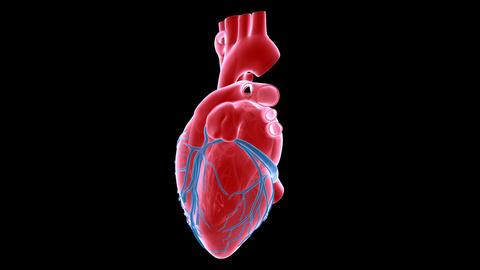 heart xray Stock Video Footage