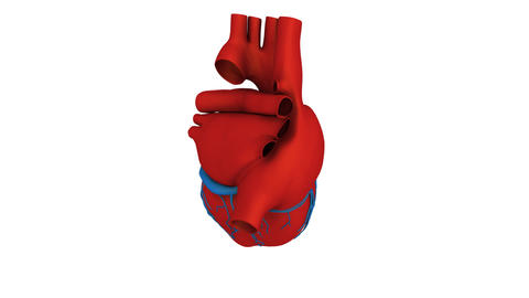 Heart Model stock footage