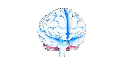 brain draw Stock Video Footage