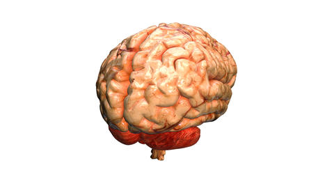 brain real Stock Video Footage