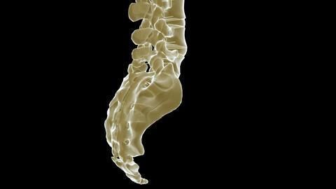 spine xray Animation