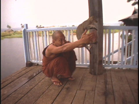 A Buddhist monk teaches a cat to hurdle his hands Footage