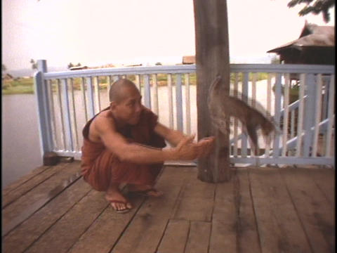 A Buddhist monk teaches a cat to hurdle his hands Stock Video Footage