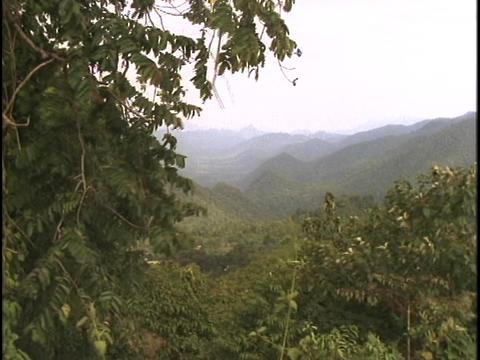A jungle lies on the Thailand-Burma border Stock Video Footage